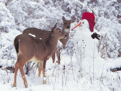 Christmas_animals-512076